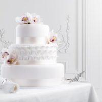 Ollies dorty s.r.o. dort bílý