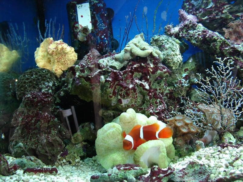 Akvárium - Hliněná bašta