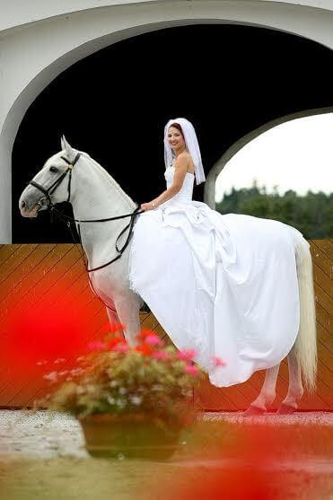 Favory Benice - nevěsta na koni 2