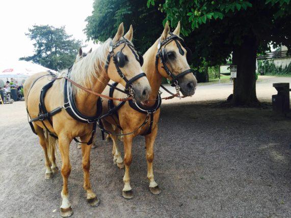 Kočár s koňmi - Zámecká terasa