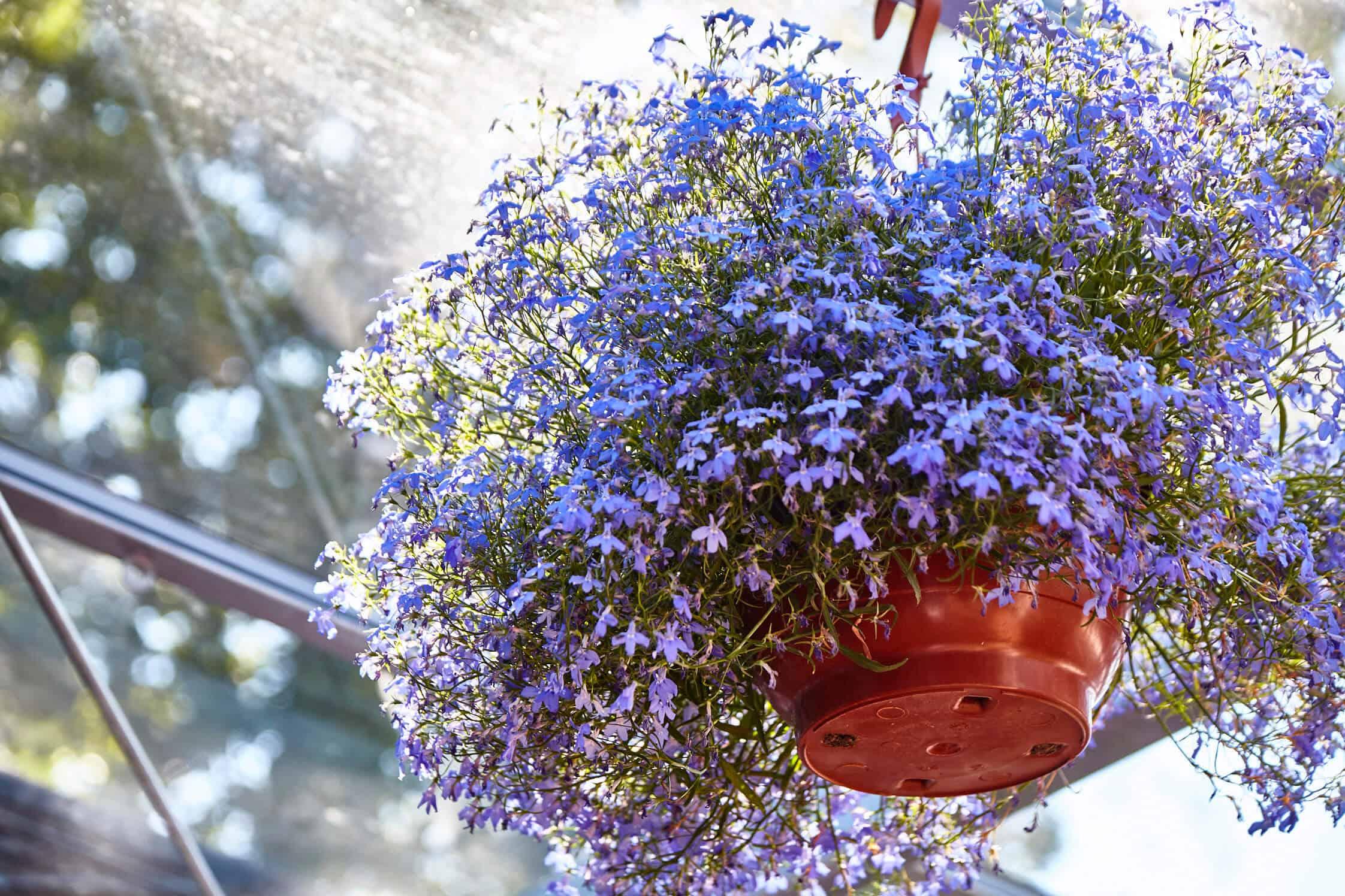 Hliněná bašta pohled z terasy na květinu