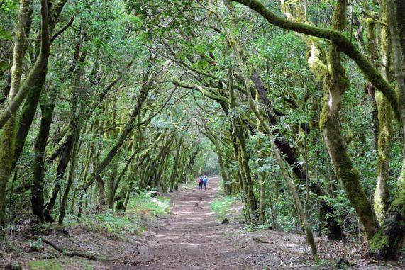 La Gomera - národní park Garajonay