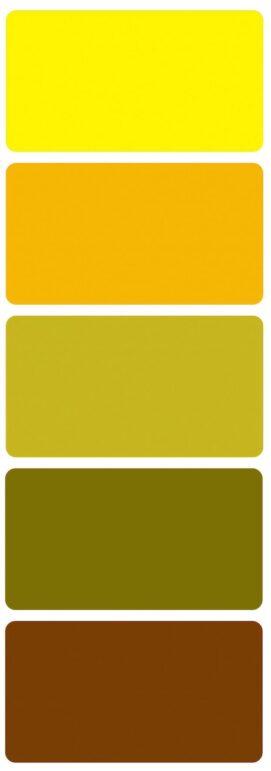 Svatební barvy slunečnice
